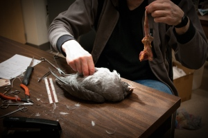 Slater Musuem of Natural History